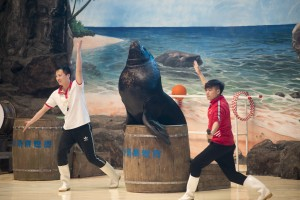 SeaWorld 11Apr18 (17)